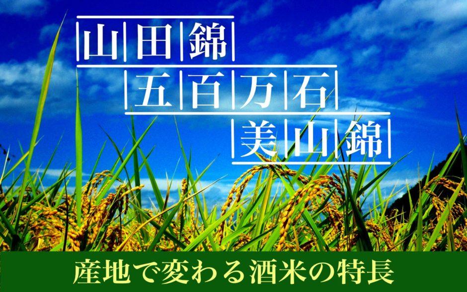 収穫を迎えたお米
