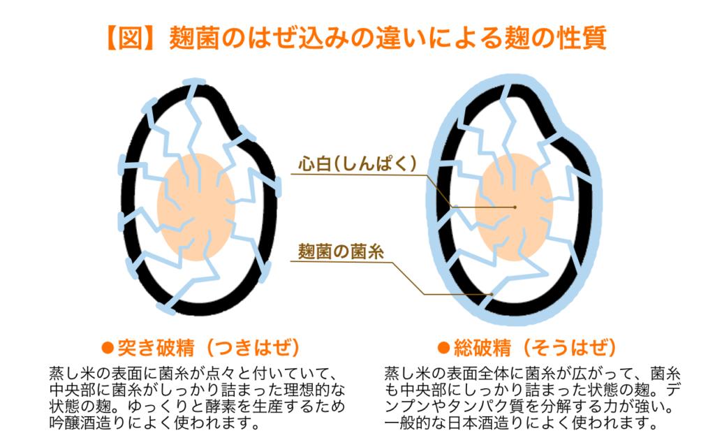 麹菌の破精込みの違いによる麹の性質