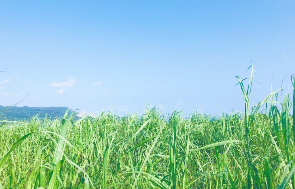 さとうきび畑
